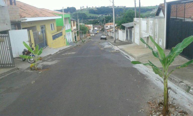 Read more about the article Moradores protestam plantando bananeiras em buracos nas ruas