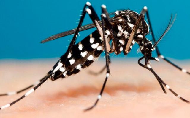 Read more about the article Saúde alerta para constante eliminação de criadouros do mosquito da dengue