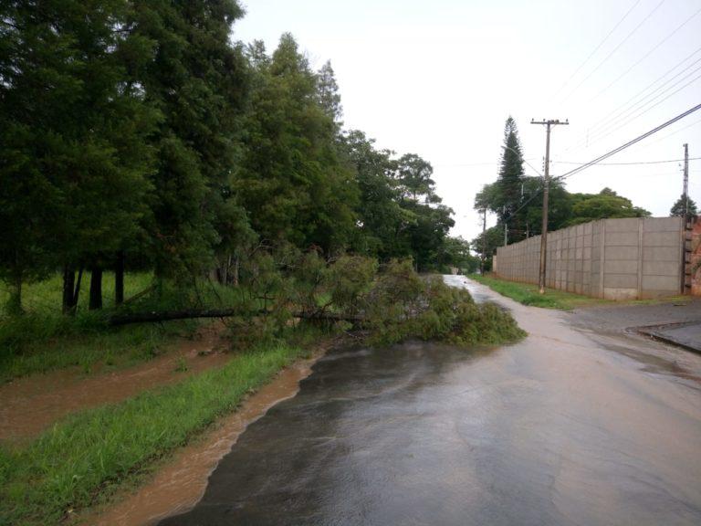 Read more about the article Chuva faz estrago e árvore cai em avenida de Capivari