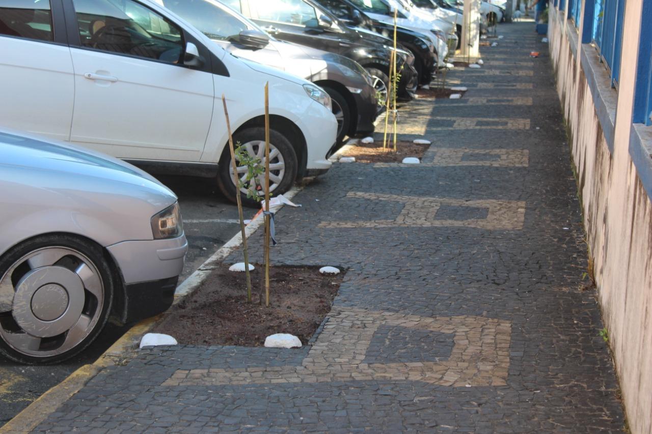 You are currently viewing Meio Ambiente planta mudas de árvores em calçada ecológica