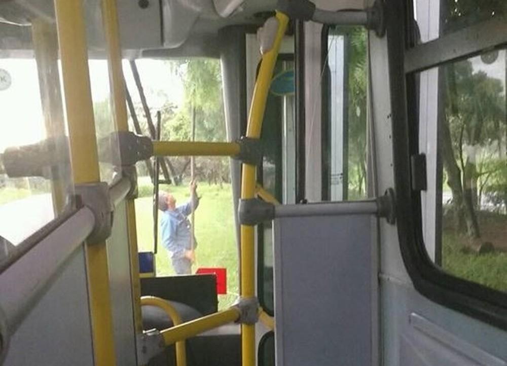 You are currently viewing Motorista estaciona ônibus com passageiras para colher mangas