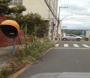 You are currently viewing Após denúncia, calçada com 'milharal' é limpa no Centro de Piracicaba